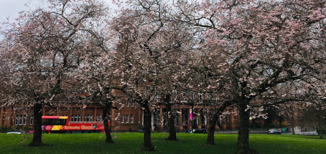 Leila Murphy: Cherry blossom and the Kelvin Hall